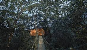 tree house resort. Vythiri Resort - Tree House .