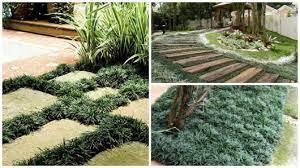 Existem diversos tipos de grama e formas. Grama Preta 7 Dicas Para Plantar E Cuidar Preco E Fotos