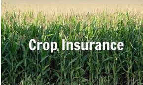 Details related to the company's stakeholders, grievance redressal mechanism and laws are available. Crop Insurance Market To Witness Massive Growth Agriculture Insurance Company Of India Limited Aic American Financial Group Inc Business