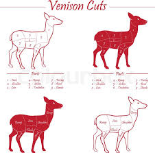 Deer Butcher Chart Venison Meat Cut Diagram Scheme Stock Vector Colourbox