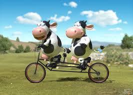Resultat d'imatges de two cows