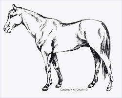45 Cavallo Da Colorare Per Bambini Best Coloring Page Con Immagini
