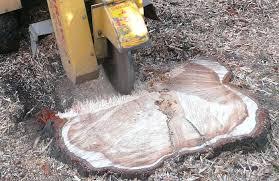 tree stump removal rot chemical australia tree stump remover