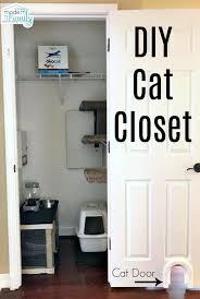 convert a closet into a cat room