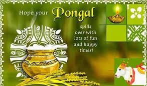 thai pongal the festival of the tamils