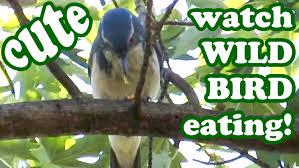 Backyard Bird  What A Lovely Shade Of Grey  Love Backyard Birds Backyard Bird Watch