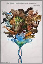 Endless Forms Most Beautiful Quote Best of Happy Birthday Darwin Science Nature Pinterest Darwin