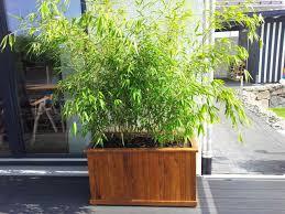 Gallery Of Shop Bambus Als Kuebelpflanze Auswahl Und Pflege L