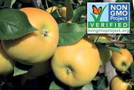 Opal Apple Verified NonGMO  Good Fruit GrowerNon Gmo Fruit Trees For Sale