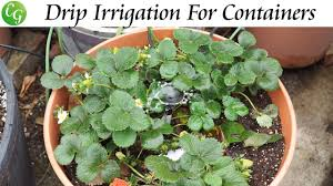 drip irrigation watering system for containers setup instructions