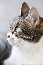pipolino chat amazon