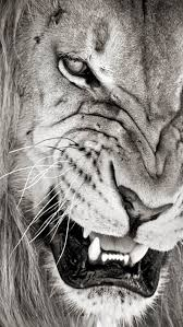 mad lion wallpaper