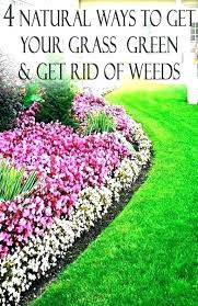 how to get rid of weeds in vegetable garden keep weeds out of garden how to