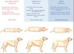 Fat Pets No Dog About It Blog