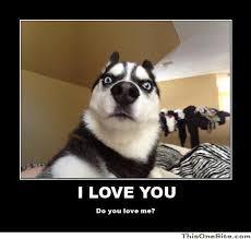 Shocked Dog Meme Generator - Captionator Caption Generator - Frabz via Relatably.com