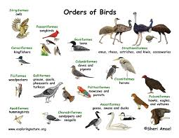 Bird Taxonomy Chart Bird Classification Lecture And Handouts