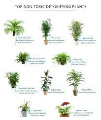 house plants that are safe for dogs