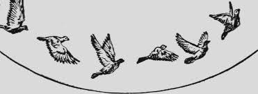 """Résultat de recherche d'images pour """"gifs pigeon"""""""