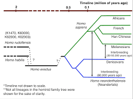 The Dawn Of Homo Sapiens Our Family Tree Grows Messier