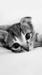 cute kitten 640x1136 wallpapers jpg 640 1136 s wallpaper wallpaper wallpaper and