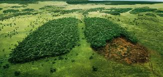 essay on global warming causes effects and solution deforestation