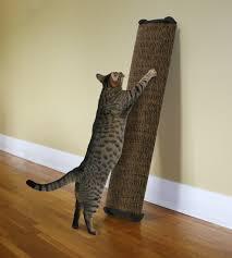 image of cat scratch post diy