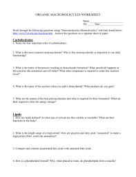 Organic Macromolecules Worksheet Worksheet Fun And Printable