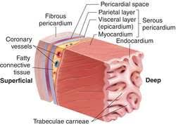 pericardial sac pericardial sac definition of pericardial sac by medical dictionary