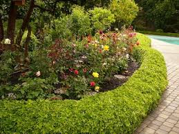 Small Picture roses and flowers look best with a border here english ivy is used