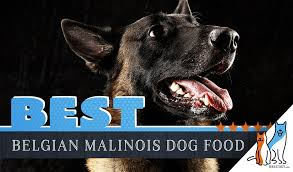 Nature S Domain Puppy Food Feeding Chart 9 Best Belgian Malinois Dog Foods Plus Top Brands For