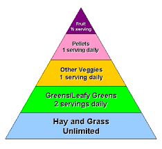 Guinea Lynx Vegetable Chart Cavy Cages Nutrition Page