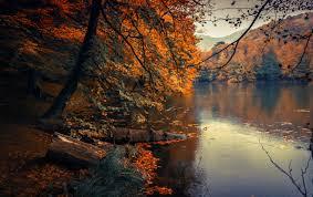 Autumn Leaves   Tafisa