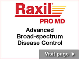 Bayer Raxil Seed Treatments Crop Science Us
