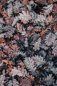 Nature Wallpapers Dried Autumn Leaves ...