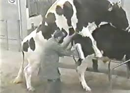 Cow Videos / Zoo Zoo Sex Porn Tube / Most popular Page 1