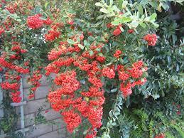 fall garden flowers. My Fall Garden {Garden} Flowers O