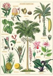 Plant Chart Tropical Plants Chart
