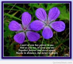 Purple Flower Quotes Nice Flowers Quotes Photos