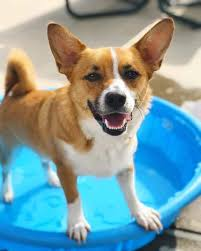 cojack playing in the pool on a hot day