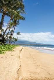 5x7 <b>Seaside</b> Photography Background <b>Beach Coconut</b> Tree ...