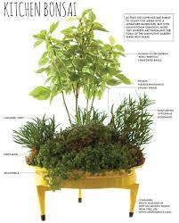 kitchen countertop herb garden bonsai planting recipe how to diy