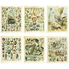 Seashell Chart Meishe Art Vintage Poster Print Biology Botanical Science