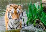Download Foto Animal Pictures · Pexels · Free Stock Photos