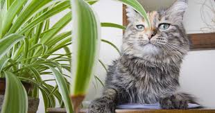 cat on a table next to a houseplant with a haughty expression