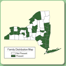 Rutaceae - Family Page - NYFA: New York Flora Atlas - NYFA: New ...