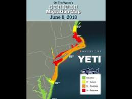 Striper Migration Map 2018 In Review