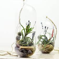 fullsize of examplary air plant terrarium air plant terrarium ps terrariums hanging glass air plant terrarium