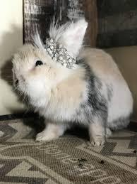 Bunny bun princess | Cute animals, Bunny, Animals