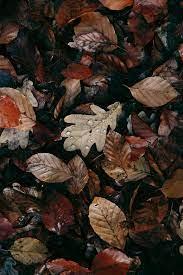 Iphone Tumblr Aesthetic Fall Wallpaper ...
