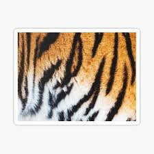 Search by tag, profiles or locations. Cats Of Instagram Stickers Redbubble